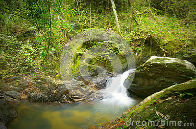 Forest photography, mountain river with waterfall