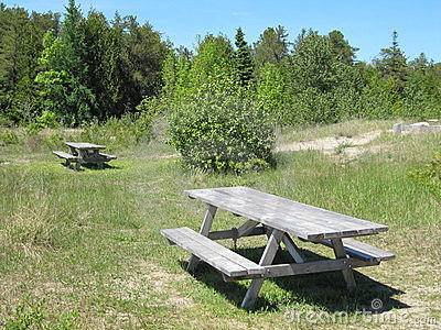 Forest picnic area