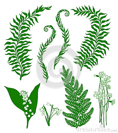 Forest plants