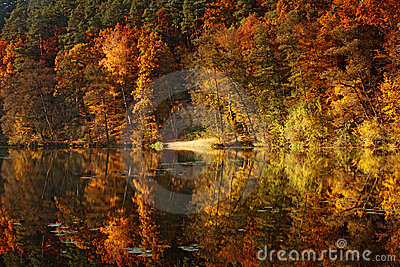 Forest pond in autumn