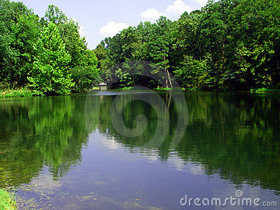 Forest reflecting on lake