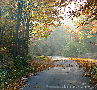 Free Forest Road Royalty Free Stock Photos - 6695918