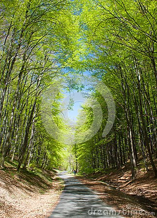 Forest road and green forest