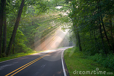 Forest Road Sun Beams and Rays
