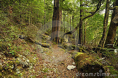 Forest On The Round Lake Rotoiti Track Stock Images - Image: 23750034