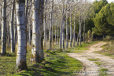 Forest with rural way