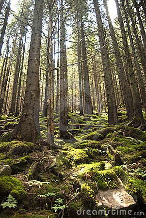 Free Forest Scene With Moss Stock Photo - 15414200