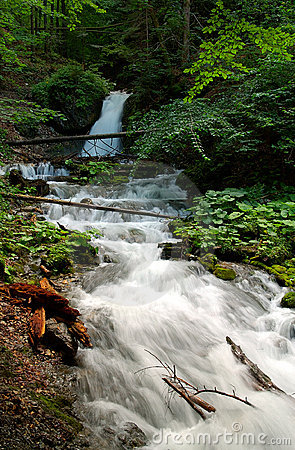 Forest scenery with small waterfall
