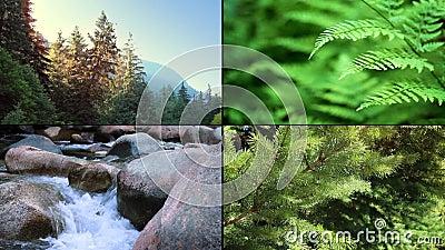 Forest Scenes Montage stock videobeelden
