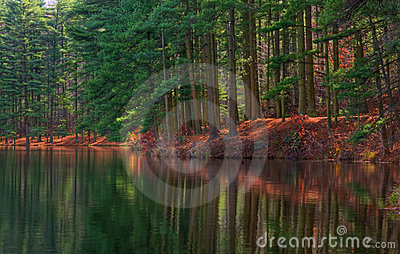 Forest Shoreline Reflections