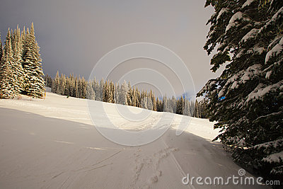 Forest skiing country