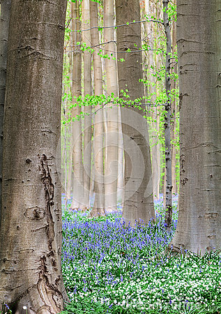 Free Forest Spring Flowers Royalty Free Stock Image - 31044676