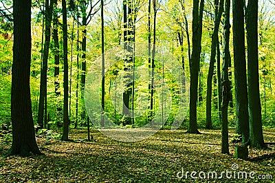 Forest in springtime
