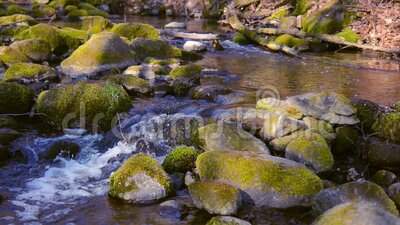 Forest stream. Lithuanian Europe nature in early spring season. Nature forest, flowing running stream water in spring season. High quality video of Lithuanian stock video