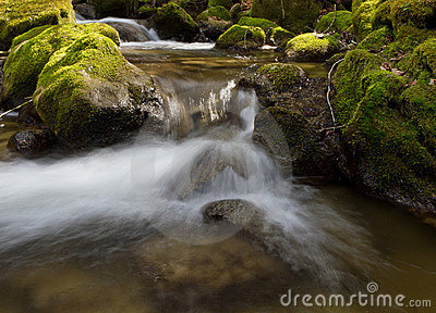 Forest stream log exposure