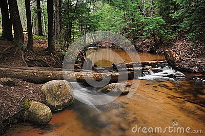 Forest Stream near Marquette, Michigan.