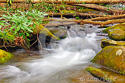 A Forest Stream in Spring
