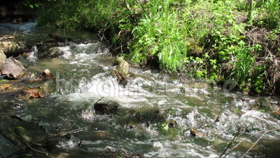 A Forest Stream. Water runs over rocks and sticks in a forest stock video footage