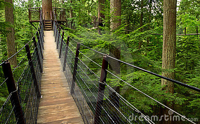 Forest Suspension Bridge