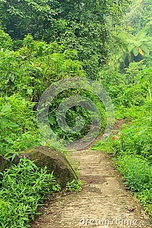Free Forest Trail In Madakaripura Waterfall Area Stock Photography - 33546722