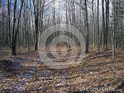 forest trail landscape