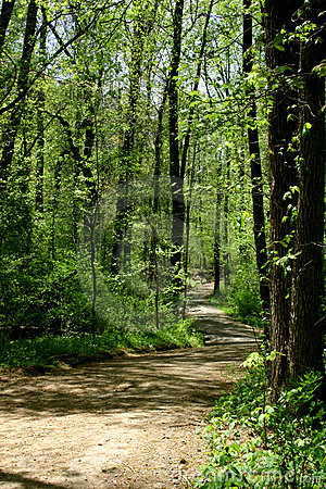 Forest Trail in Spring