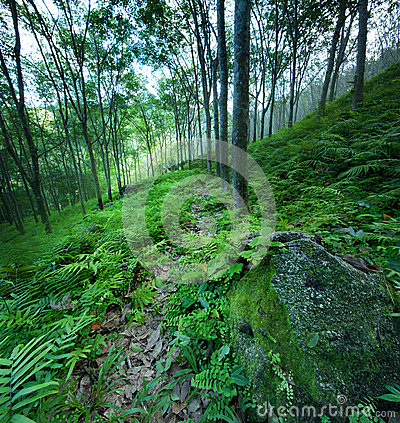 Forest trees green nature backgrounds