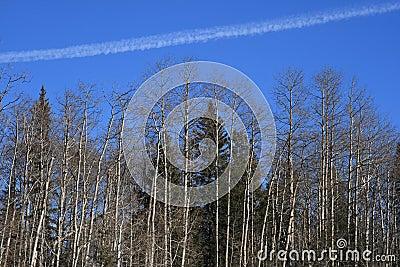 Forest Vapor Trail