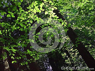 Forest walk 3