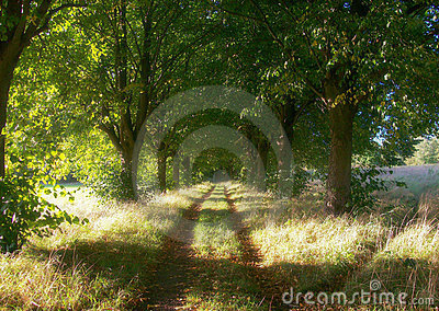 Forest walking paths
