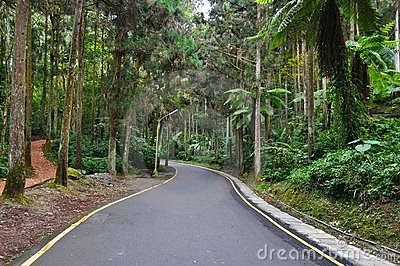 Forest walkway at Sitou, Taiwan
