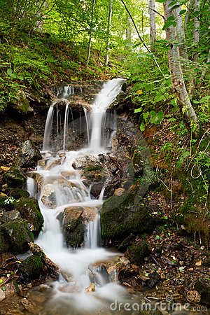 Forest waterfall cascading