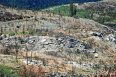 Forest after wild fire, Yosemite National Park