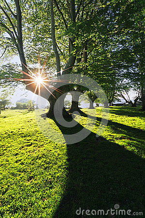 Free Forest With Light And Shadows Stock Photos - 56689243