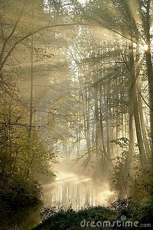 Free Forest With Sun Rays Through The Trees Stock Images - 8389274