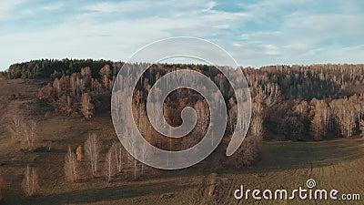 Foresta con colore d'autunno video d archivio
