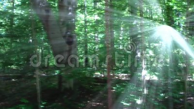 Foresta con luce solare radiante archivi video