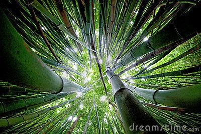 Foresta di bambù Maui