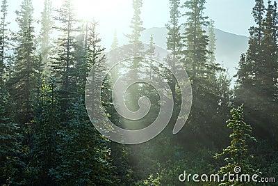 Foresta piena di sole