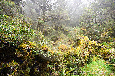 Foresta pluviale nebbiosa
