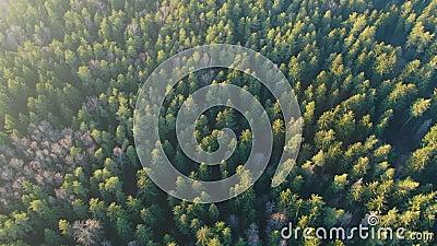Foresta verde primaverile da altezza La foresta al sole La luce del sole archivi video