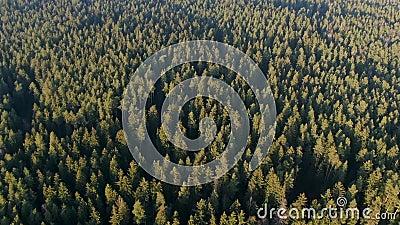 Foresta verde primaverile da altezza La foresta al sole La luce del sole video d archivio