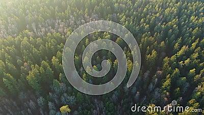 Foresta verde primaverile da altezza La foresta al sole La luce del sole stock footage