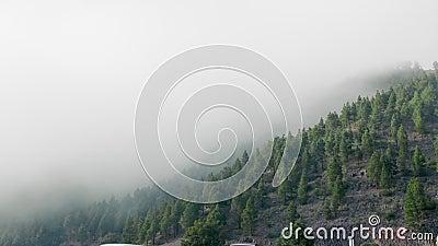 Foreste Evergreen su pendici di montagna avvolte in nubi basse per un paesaggio sognato archivi video