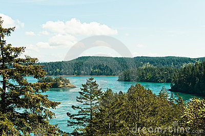 Forested Coastline with Islands