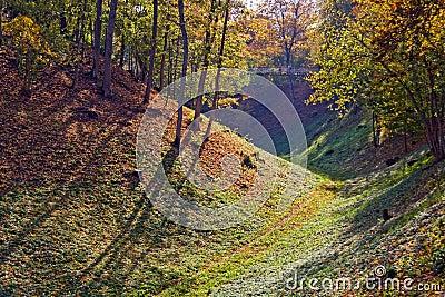 Forested hills in Viljandi