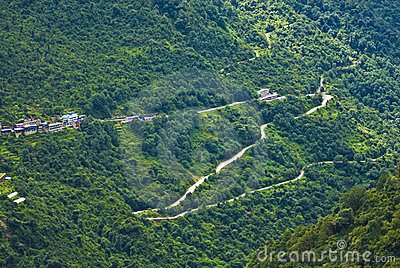 Forested hillside and roads