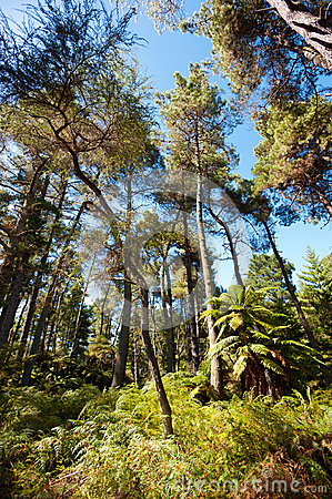 Forested Landscape near Rotorua, New Zealand