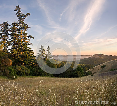 Forested Mountain Sunset in Summer