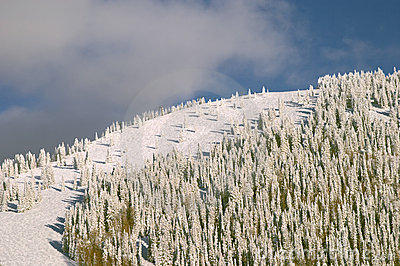 Forested mountain in Winter